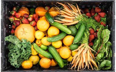 Vitaminas y Minerales: ¿Por qué son tan importantes?